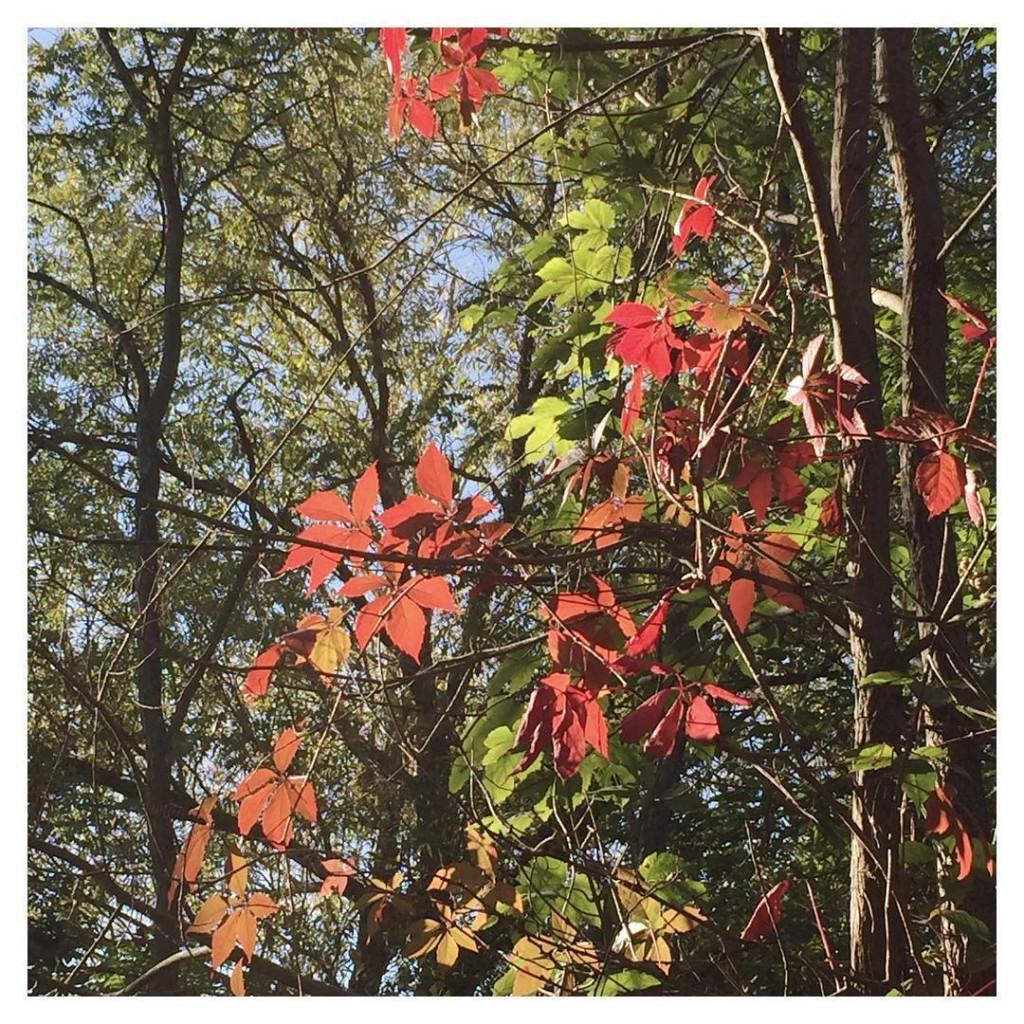 Couleurs dAutomne Bon dimanche  tous automne fontainebleau forest sundayhellip