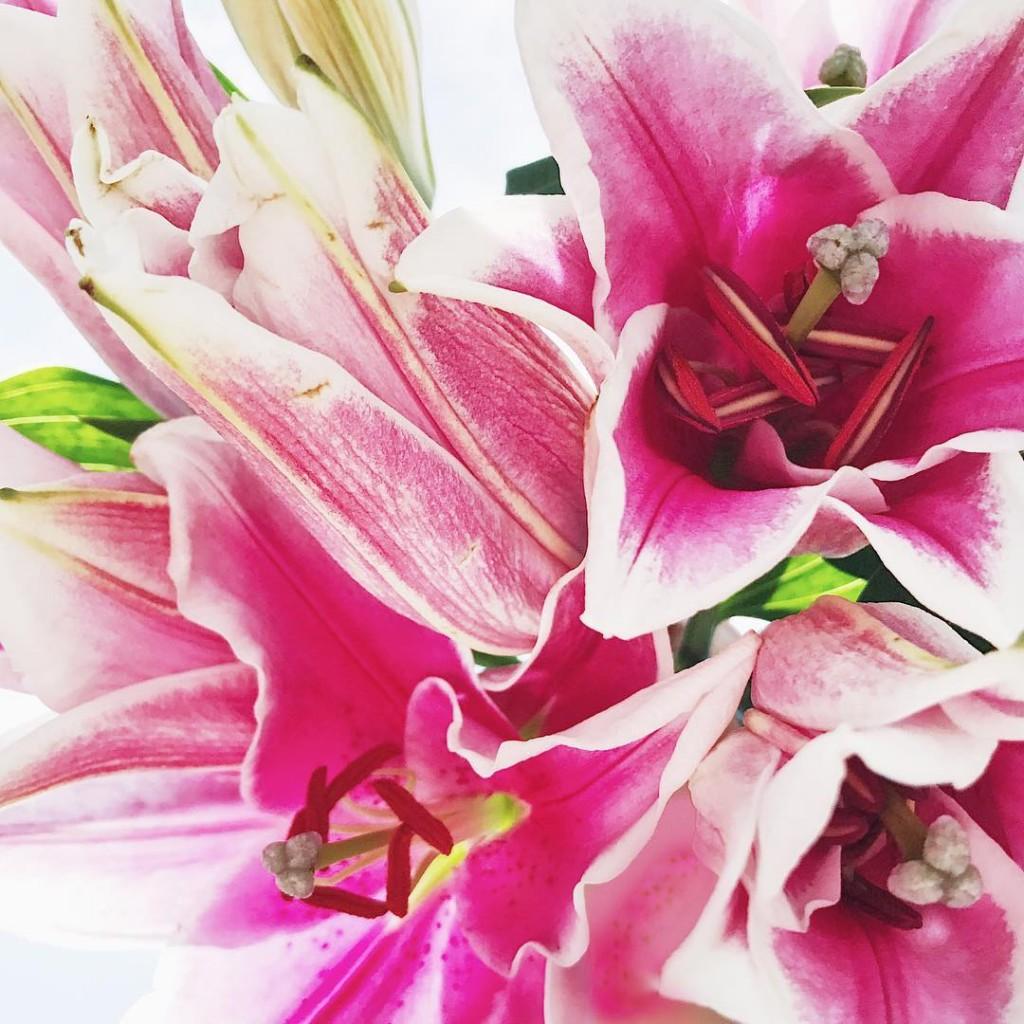Le plaisir de voir des Lys dlicatement souvrir pinkmood weloveflowershellip