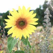 fleur-gree-des-landes